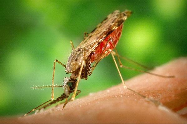 zika-getlifetips